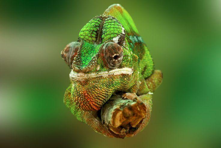 Tanie loty na Madagaskar!
