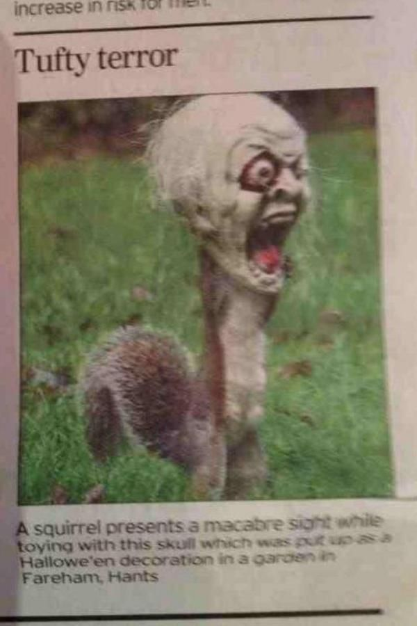 Squirrel got his head stuck in Halloween yard decoration, and terrified a neighborhood... I am dying of laughter. Awesome.
