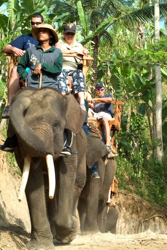 Elephant Nature Park Chiang Mai Thailandia