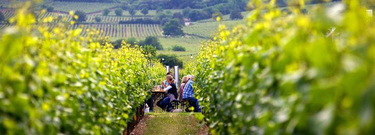 Aktuelles von der Deutschen Weinstraße - Deutsche Weinstraße