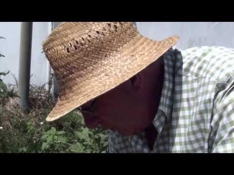 ▶ LA COMIDA QUE PISAMOS, CON JOSEP PAMIES. Plantas medicinales - YouTube