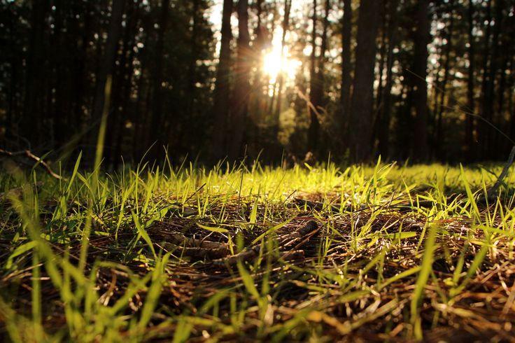 luz en el bosque...