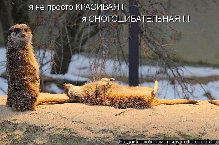 Письмо «сообщение BARGUZIN : Свежая чумачечая котоматрица (07:44 15-05-2015) [3509984/361975764]» — BARGUZIN — Яндекс.Почта
