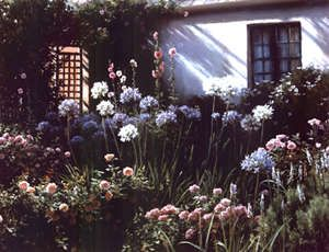 michael challen  cottage garden