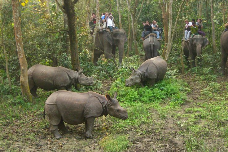 The northeast part of WB along the foothill of Eastern Himalaya is called Dooars means Gateway. Elephants and Indian one horn Rhino made the area most attractive to the tourists.