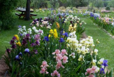Hondo Iris Farm, near Ruidoso, May Iris blooms in one of New Mexico's most beautiful gardens