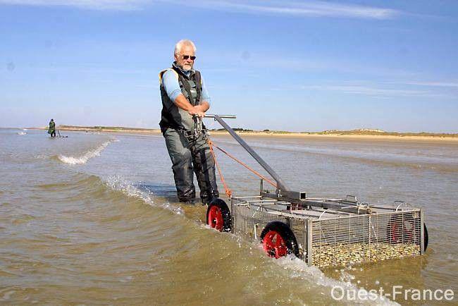 """Yves Rigault, pêcheur à pied professionnel: «À Erdeven, on appelle la telline """"pied-d'alouette"""". À Fort-Bloqué, on la nomme  """"fleur de genêt"""". »"""