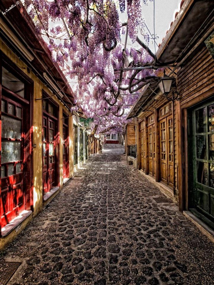 Molivos (Molyvos) | Lesbos (Lesvos)  The smell of wisteria always make me long for Molivo!  lesbos-eiland.webs.com
