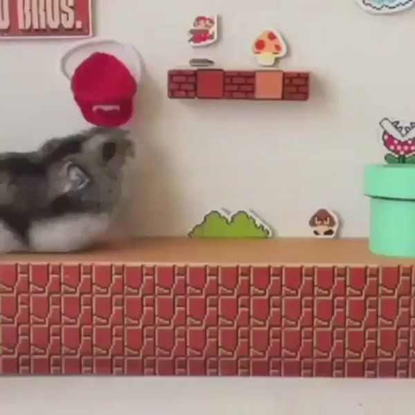 "kawal preet on Twitter: ""Hamster playing mario...👍😂✨🍄✨🐀🍒✨🍄 https://t.co/cqXZILRKf8"""