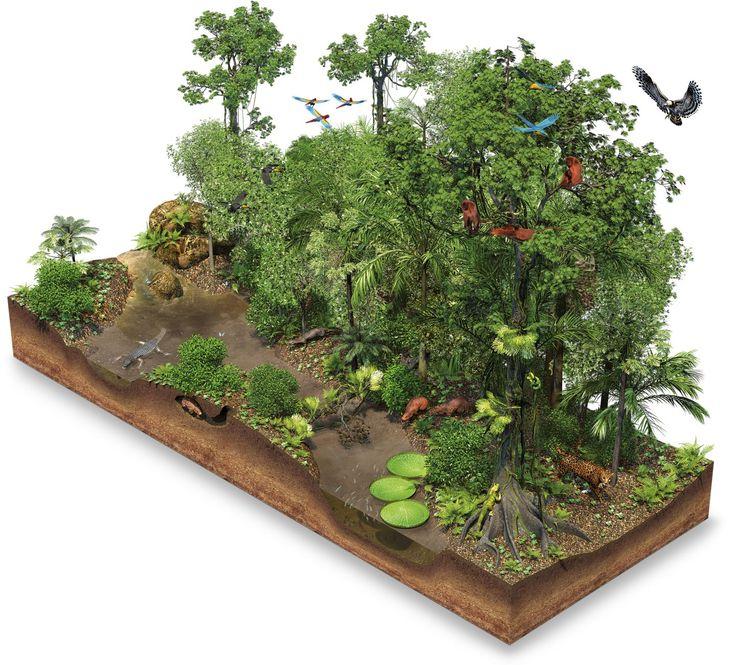 Rainforest Artwork wgiuvq