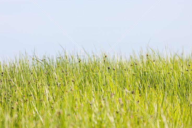 Green Summer Meadow - Fototapeter & Tapeter - Photowall