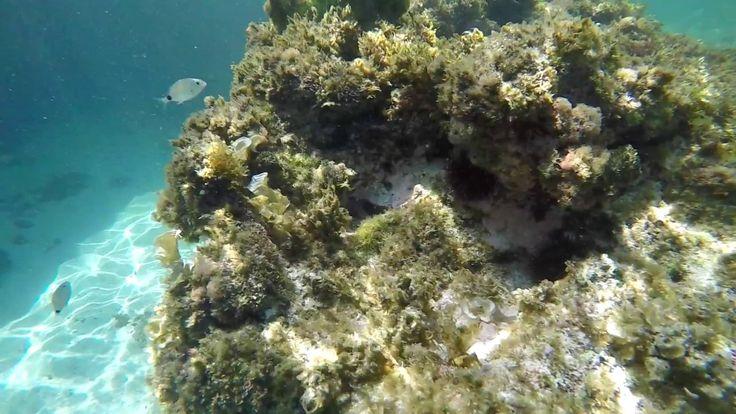 Menorca underwater  Aquí se muestran imágenes muy sensibles, cuidado si estás trabajando te entrarán muchas ganas de pillarte vacaciones e ir a Menorca, a descubrir este pequeño paraíso en el Mediterráneo.  Menorca-web.de