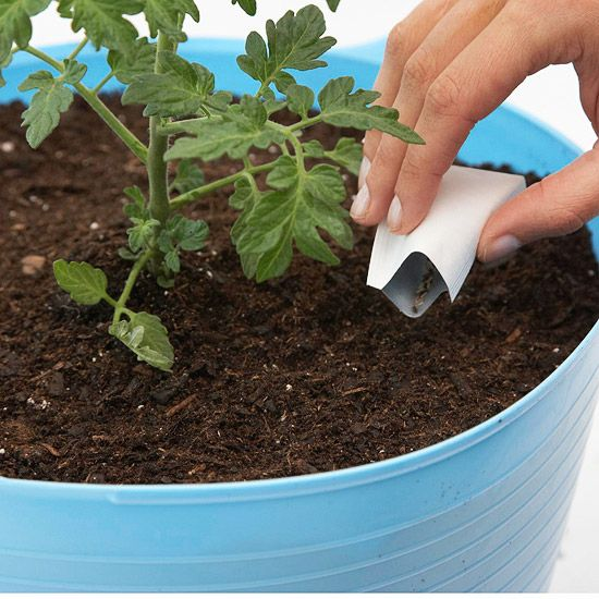Sow Your Lettuce Seeds when the weather turns too hot for these cool-loving salad greens, the heat-seeking tomato plant will appreciate the extra elbowroom. Cover the seeds with about 1/4 inch of potting mix