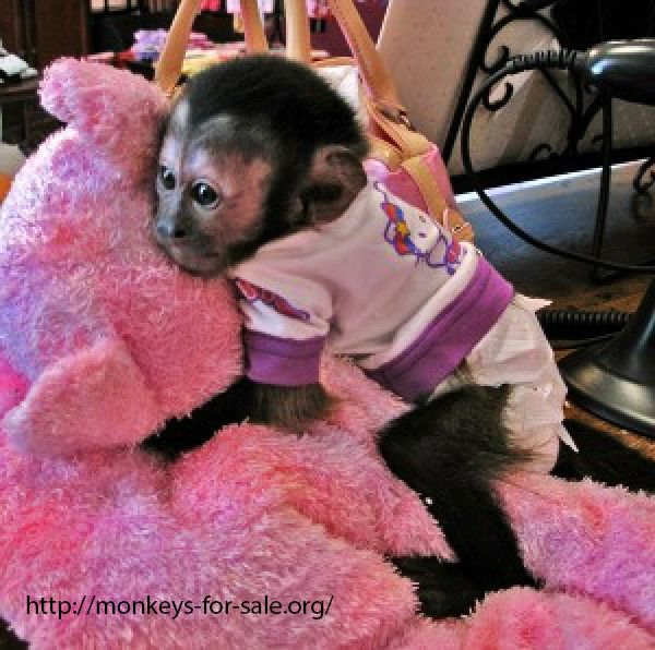 30 best images about Monkeys For - 70.4KB