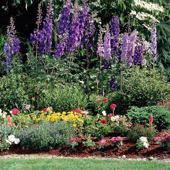 """""""Create a living privacy screen, hide an ugly fence, or add a beautiful garden backdrop with these extra-tall plants.""""  -Better Homes and Gardens"""