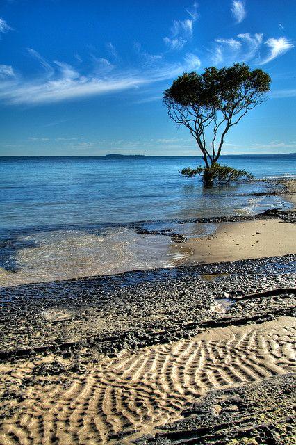 Fraser Island, Australia #fraserisland #queensland #australia www.fraserisland.net