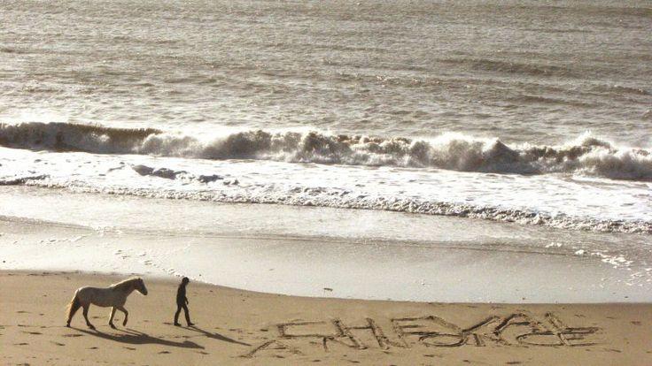 Cheval Annonce EN GRAND sur laplage ! Magnifique photo, une des gagnantes du concours #CA ! #cheval #plage #chevalannonce #cavalier
