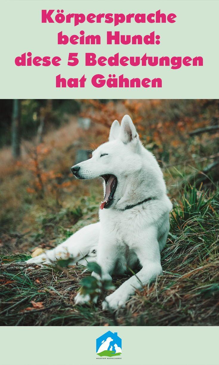 Korpersprache Beim Hund Diese 5 Bedeutungen Hat Gahnen Mit Bildern Hunde Hunde Verstehen Haustiere