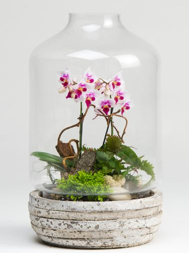 A mini phalaenopsis orchid is planted among other small green plants and natural elements for this wonderful, unique gift (care instructions included). (Terrarium is about 1.5 feet tall)