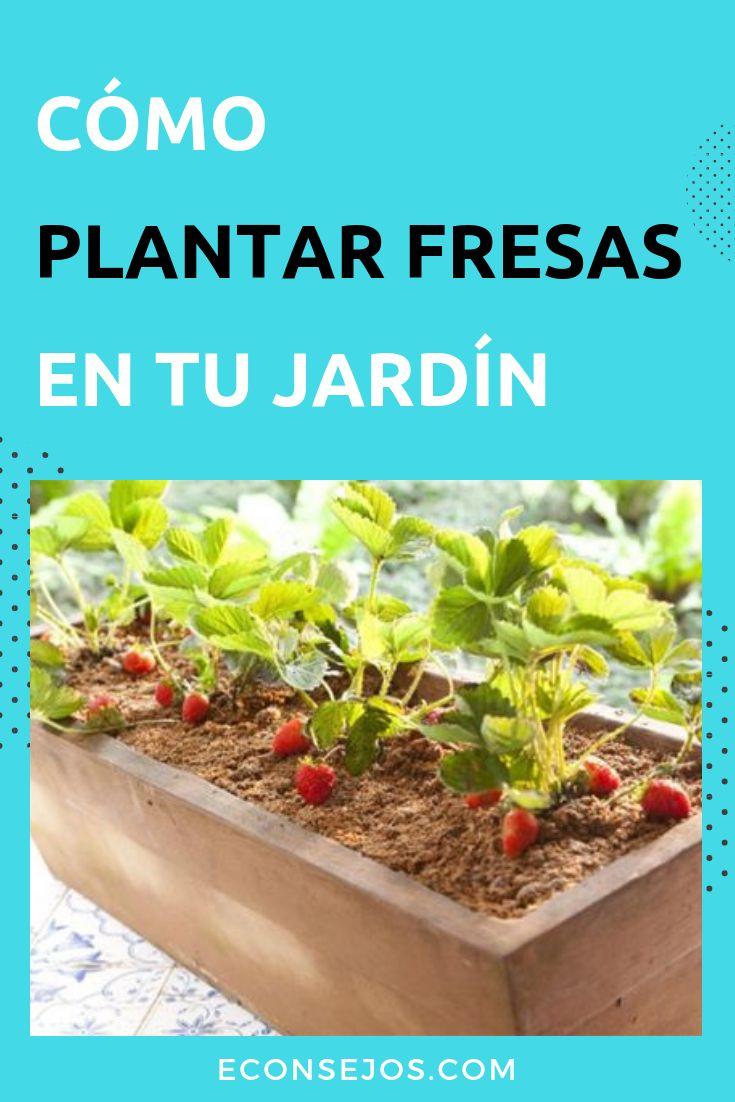 Plantar Fresas - Cómo Hacer en Casa My Dream Home, French Lessons, Flowers, Plants, Ideas Para, Gardening, Diy, Gardens, Medicine