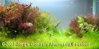 2007 AGA Aquascaping Contest - Aquatic Garden, 200L ~ 400L