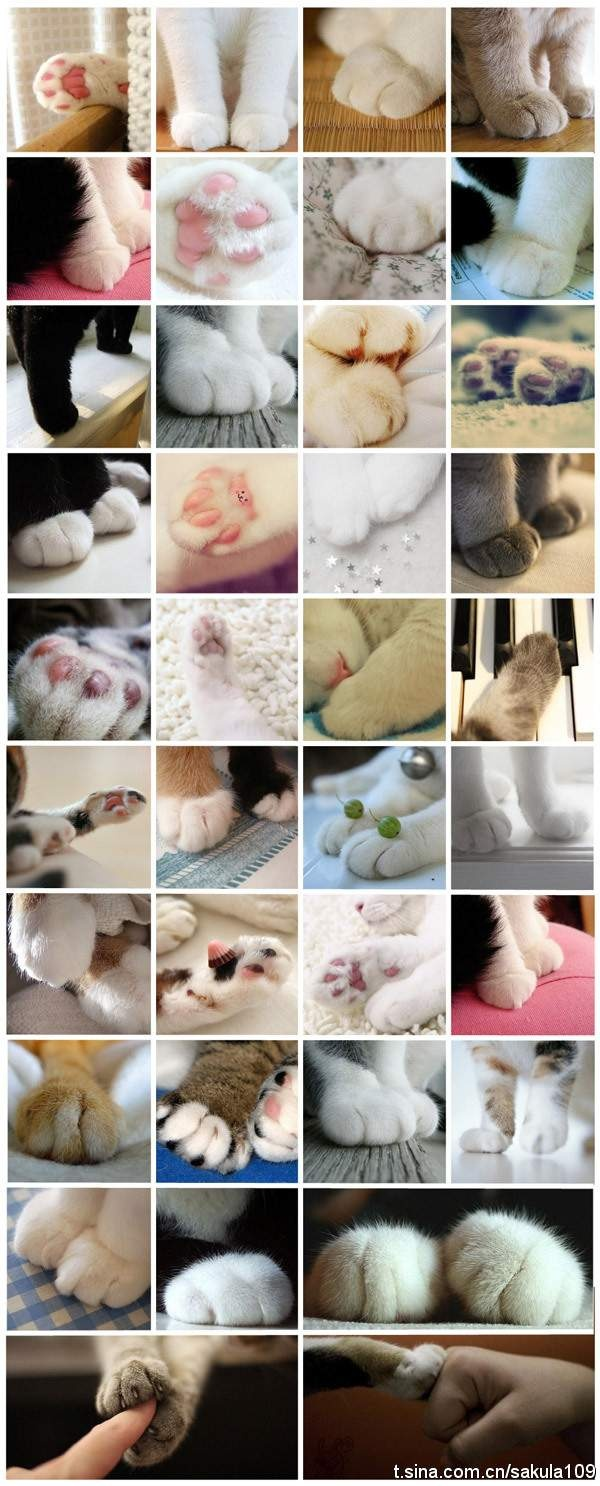 고양이 발!! 이거슨 진리!