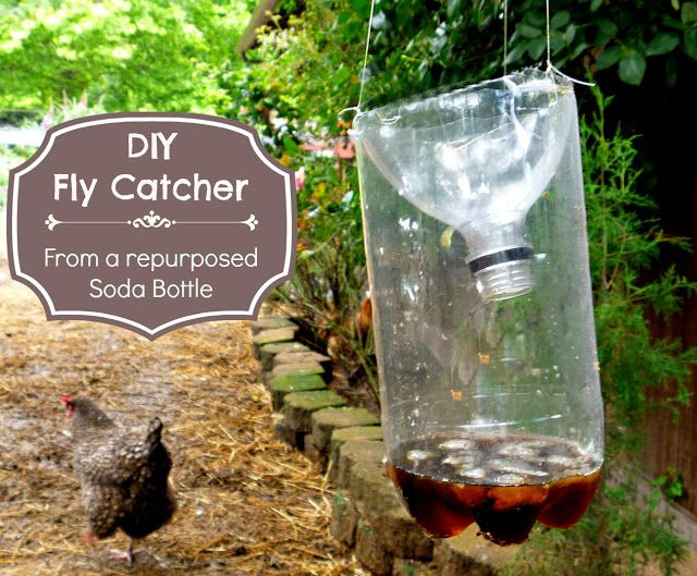 Fresh Eggs Daily®: Got Flies ? Make This Easy DIY Fly Catcher out of a Soda Bottle