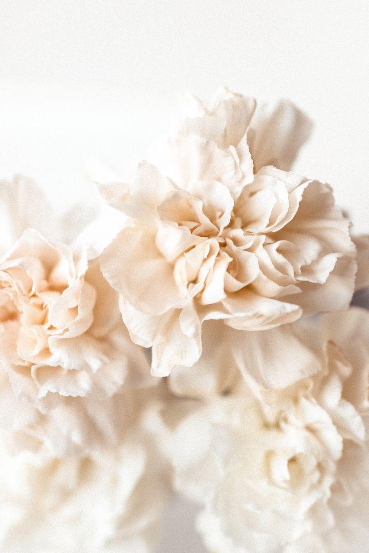 Pink Florals | @methodphotog