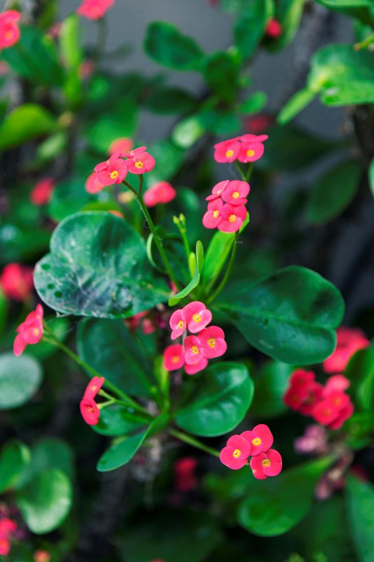 A tropical garden in the heart of Melbourne Tropical