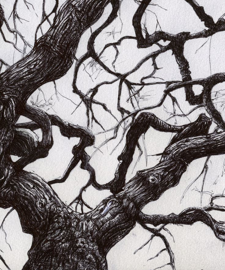 Tree by Karl Trewhela #illustration #drawing