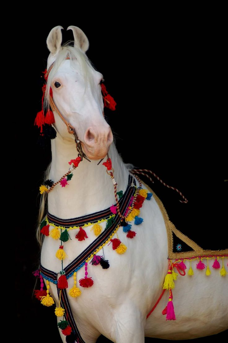69 best horse costumes ~mary~ images on pinterest | horse costumes