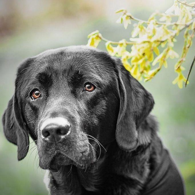 Hausmittel Gegen Durchfall Beim Hund Durchfall Beim Hund Hunde Armer Hund
