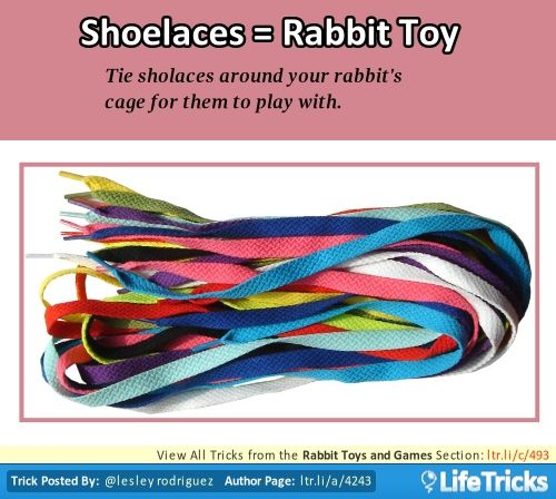 Rabbit Toys and Games - Tie Shoelaces Around Your Rabbit's Cage