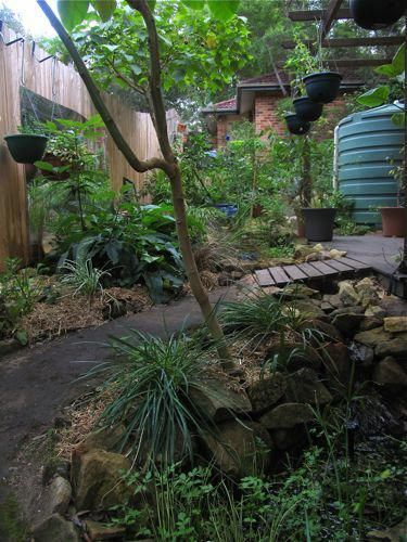 Backyard gardening creates a mini food-forest up the side of an