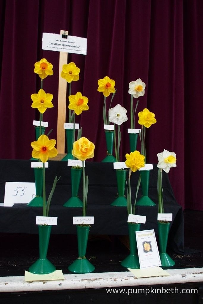 John Goddard won first prize for his daffodil collection, which you can see on the right hand side of this photograph. This class at The Daffodil Society Mid Southern Group Spring Show was the first leg of The Daffodil Society Southern Championship.