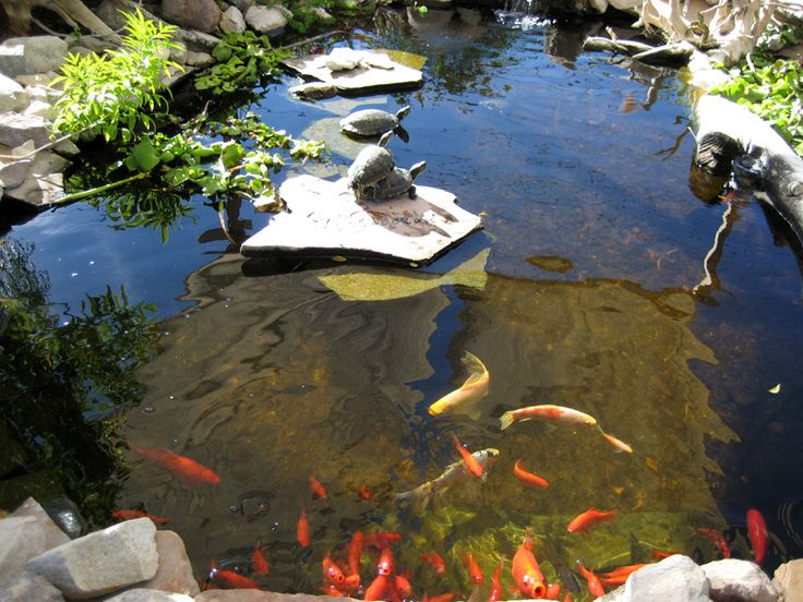 Above ground turtle ponds for backyards basking turtles for Above ground koi pond design
