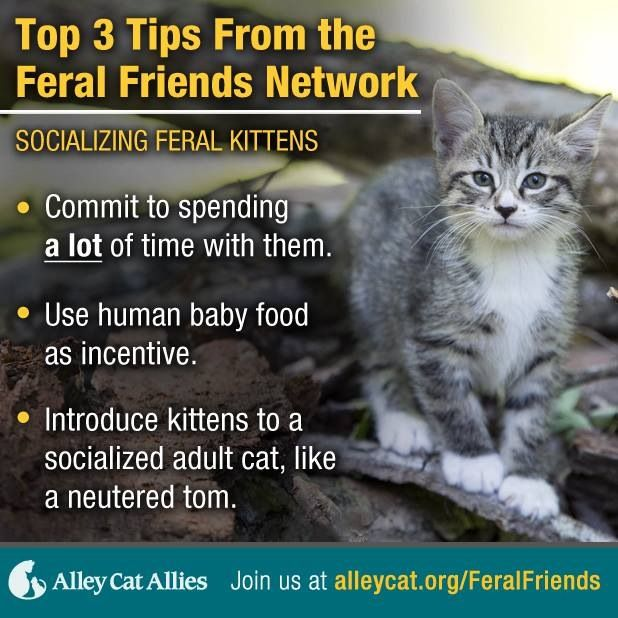 Tips For Feral Cats