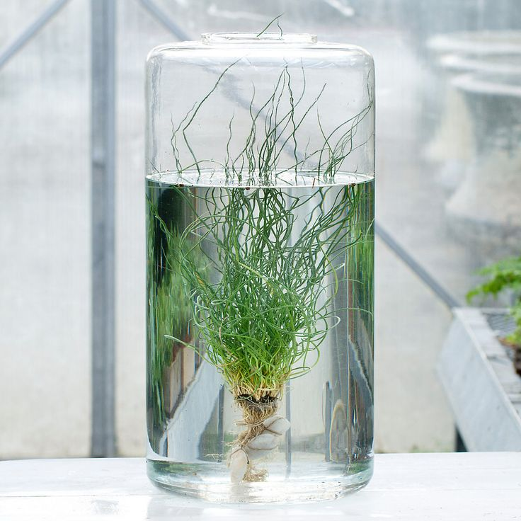 8 best images about water bowls on pinterest crafts for Indoor gardening glasses