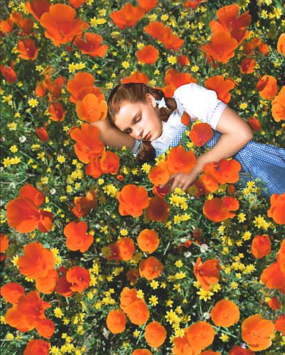 WIZARD OF OZ POSTER 24X36 INCHES  DOROTHY ASLEEP IN THE POPPY FIELD   61X90 CM 35.00