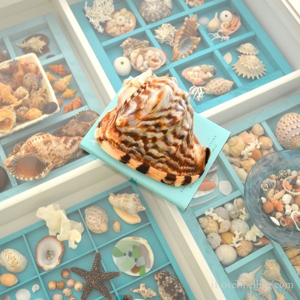 25 unique seashell display ideas on pinterest shell for Ideas for displaying seashells