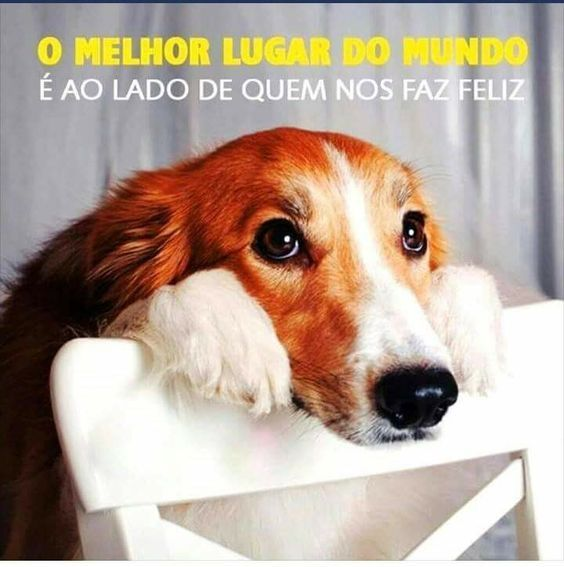 EXATAMENTE! <2 #petmeupet #amoanimais #cachorro #gato #filhode4patas #maedepet #maedecachorro #maedegato #paidecachorro #paidegato