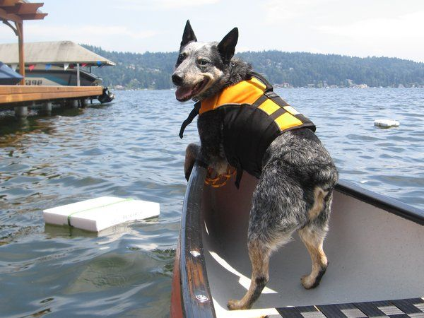 Meet the Dogs Sniffing Out Whale Poop for Science | Science | Smithsonian