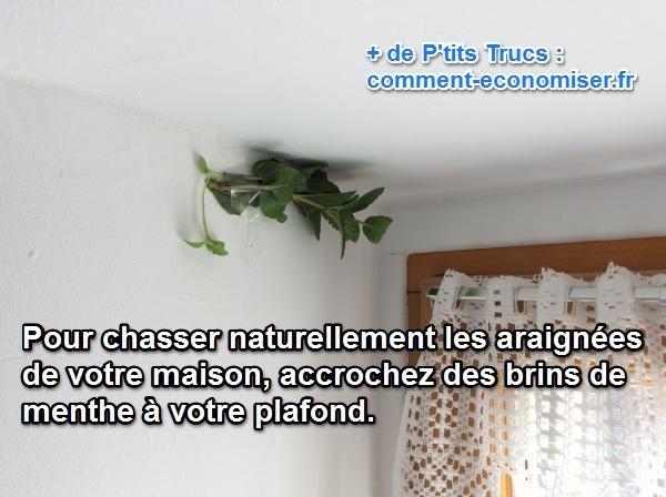 C'est l'invasion : les araignées se sentent chez vous… comme chez elles ! Heureusement, il existe une astuce naturelle et très efficace pour chasser définitivement les araignées indésirables.  Découvrez l'astuce ici : http://www.comment-economiser.fr/truc-naturel-chasser-araignees-maison.html?utm_content=buffer323f5&utm_medium=social&utm_source=pinterest.com&utm_campaign=buffer