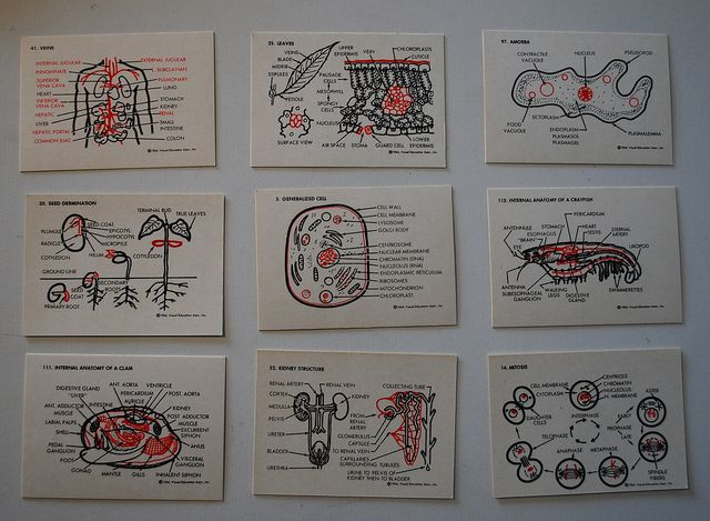 Biology Flash Cards by krakencrafts, via Flickr