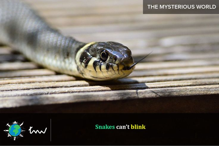 #reptiles #snakes #facts