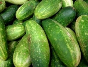 Cultivate Cucumbers in ContainersContainer Gardens,  Cukes, Skin Care, Eggs, Homemade Face Masks, Trellis, Planters Boxes, Gardenbackyard Ideas, Growing Cucumber