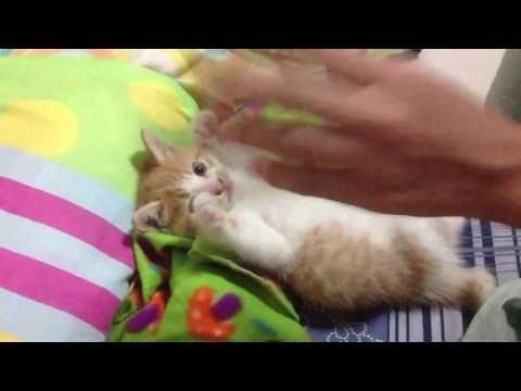 Śmieszne koty 2016 #4 funny cats -  #animals #animal #pet #cat #cats #cute #pets #animales #tagsforlikes #catlover #funnycats funny cats, Smieszne koty, nastepny filmik 500 wyswietlen 🙂  - #Cats