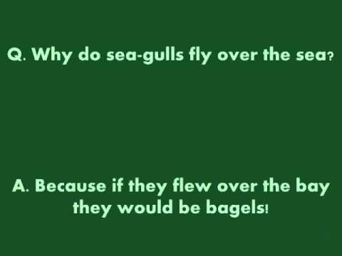 Why do sea-gulls fly over the sea? Because if they flew over the bay they would be bagels!!!