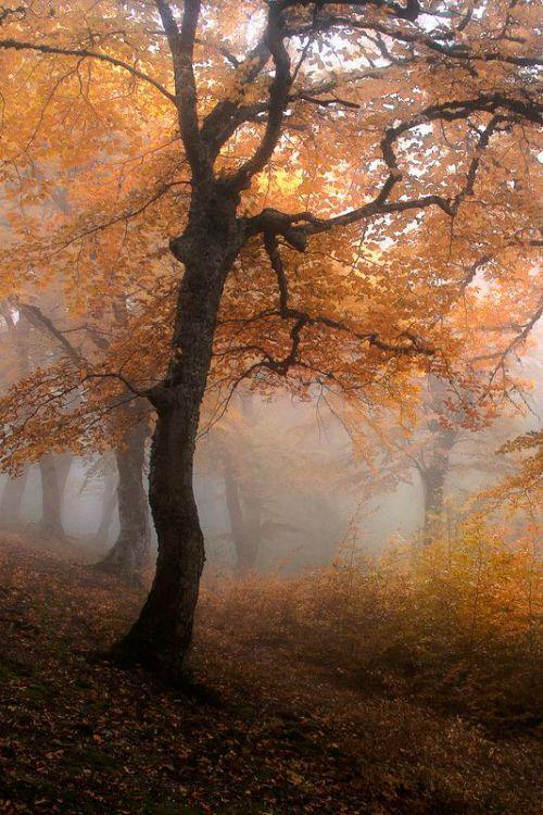. . . finding a quiet, foggy trail                                                                                                                                                                                 Mehr