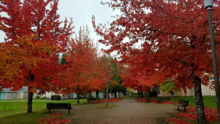Fall in Victoria - University of Victoria